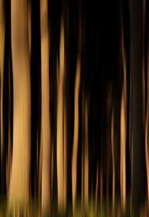 Magic forest von Jana Behr