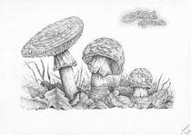 Amanita muscaria by Alexander Loboda