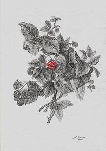 raspberry von Alexander Loboda