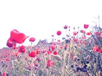 Poppy crowds. von freak-of-nature