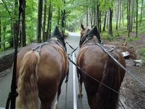 Pferdekutsche by Ka Wegner