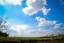 Landscape by Assi Oz