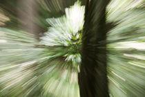 Blurred forest by Ján Kolcák