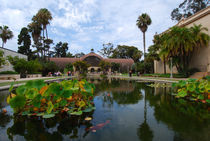 The Lily Pond, Balboa Park, San Diego, California. von David Love