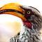 Yellowbilledhornbill