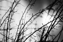 Hopeless by BALAZS FEHER