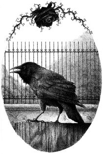 Raven-an-the-rose