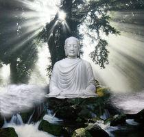 Buddha Nature by Yvonne Pfeifer