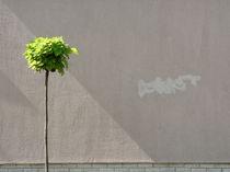 Suburban Minimalism von sonofsteppe