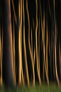 Magie des Waldes von Jana Behr