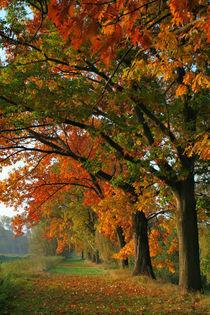 Herbstlich by Jana Behr