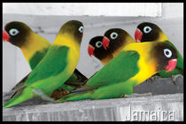 Birds of Jamaica