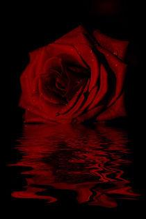 Rose-spiegel-bearbeitet-1