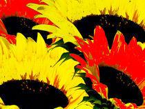 Sunny Flowers! von tcl