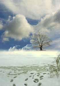 winter tree von vimark