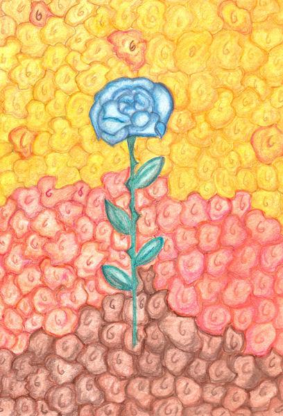 Blue-rose-on-flower-bed