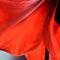 Red-big-amaryllis