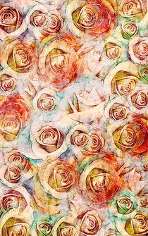 Rosenvielfalt by claudiag