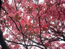 Frühling I von bretagne-olan