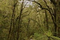 Arbre Vert von Benjamin Herbstreit