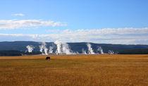 Yellowstone Landschaft mit Bison by buellom