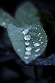 Row of Droplets von Bryan Kolb