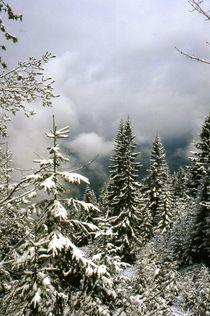 Wintereinbruch von Ulrike Ilse Brück