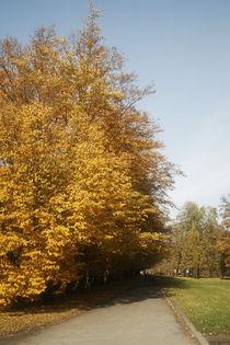 Path in autumn von Maciej Frolow
