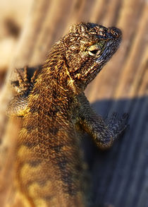 Lizard by Eye in Hand Gallery