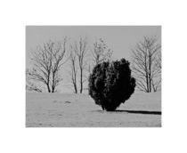 Bäume im Ödland von Michael Guntenhöner