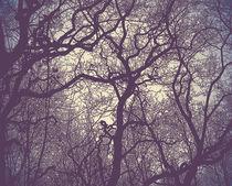 Silhouette of branches von artefy