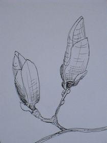 Ausschnitt I vom Magnolienzweig von Katja Finke