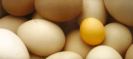 Eggs-small