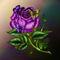 Rose-pinkbbf