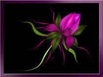Vector flower by Karla White