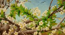 Apple flowers / Apple-Blüten von Apostolescu  Sorin