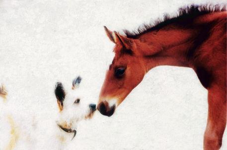 Hund-und-fohlen2