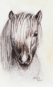 Pony von dunja54