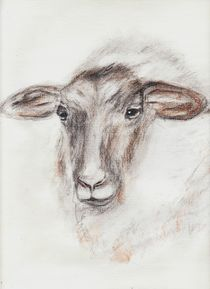 Schaf von dunja54