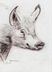 Schwein von dunja54