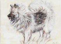 Wolfsspitz von dunja54