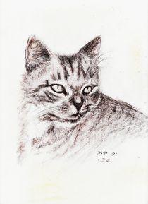 Katze von dunja54