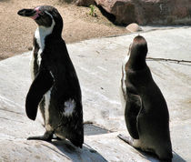 Pinguine von Silvia Müller