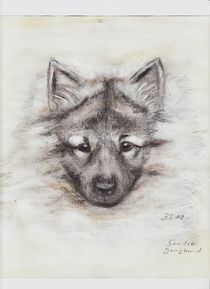 Wolfsspitzwelpe
