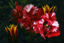 Tulpen by pahit