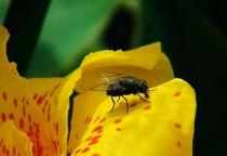 die Fliege by theresa-digitalkunst