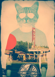 'The Cat' by Ali GULEC