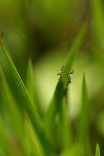 Libelle-guck