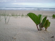 Lonely plant by Bruna Kleemann