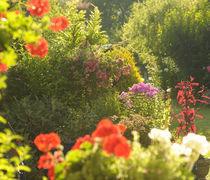Garden outside the window by Tereza Visinka